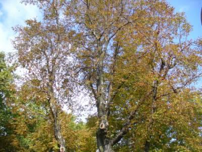 Meteo/alberi_meteo.JPG
