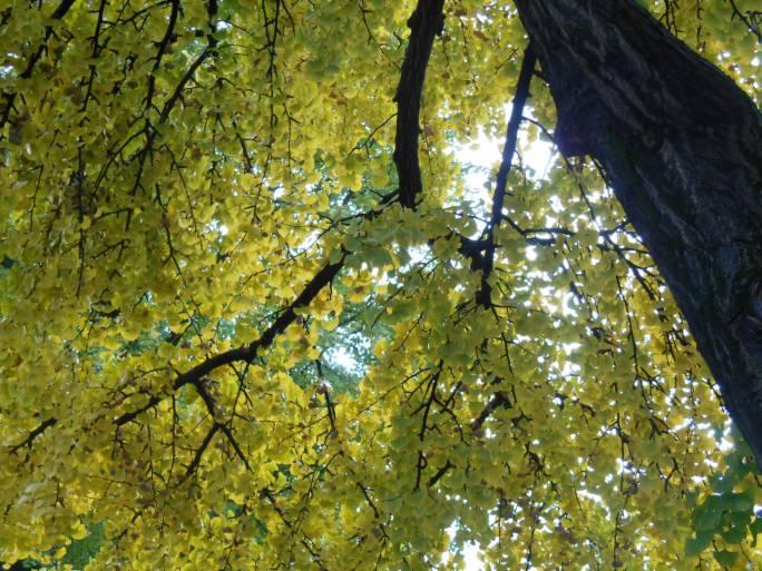 Meteo/albero_autunno_2014.jpg